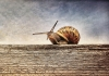 animal-antenna-close-up-813469.jpg