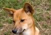 Dingo inside