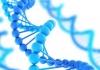 Gene resize