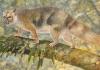 marsupiallion.jpg