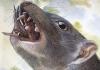 snail-eating marsupial