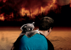 A man saving a koala in the 2020 Australian bushfire disaster.