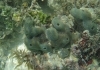 A sea sponge under water