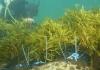 Seaweed2 1
