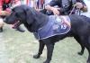 police dog drugs sniffing.jpg