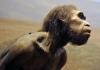 prehistoric man.jpg