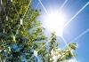 solar leaf green