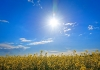sunny_day_by_andreas_wienemann.jpg
