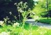 weed in focus