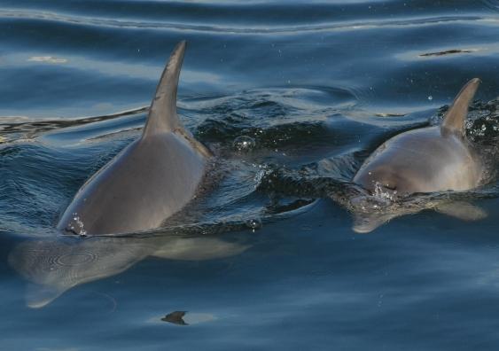 bunbury_dolphins_surfacingb_2.jpg