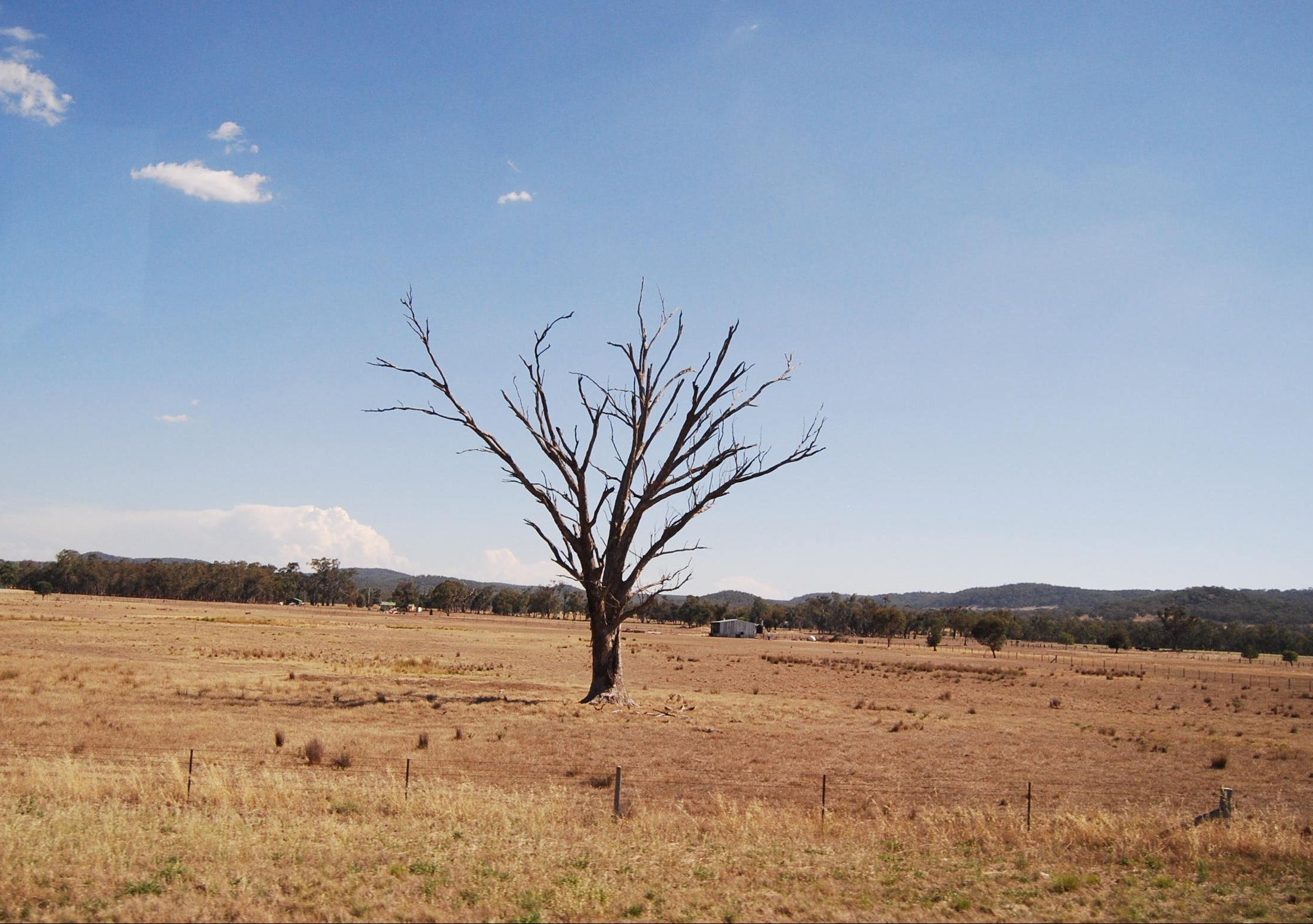 Are More Aussie Trees Dying Of Drought? Scientists Need