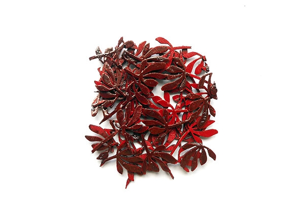 Brooch in blood red of the native Australian flower, the kangaroo paw