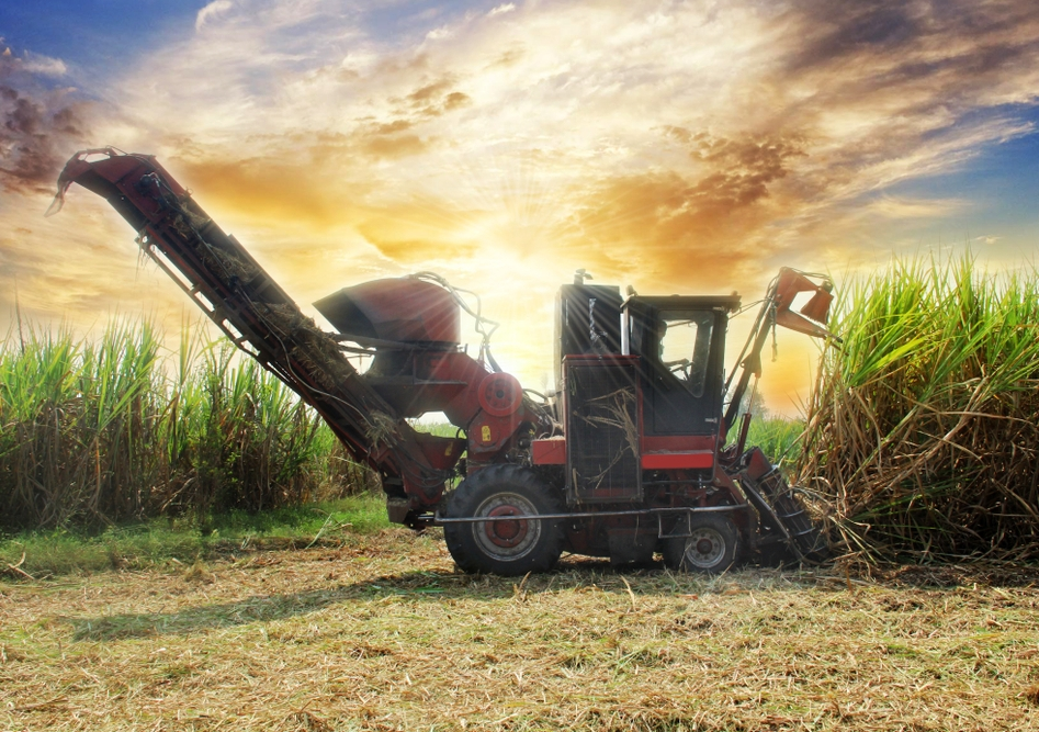 About 80% of sugar cane growers in Australia use fungicide Shirtan, which contains mercury, to treat pineapple sett rot disease. Image from Shutterstock