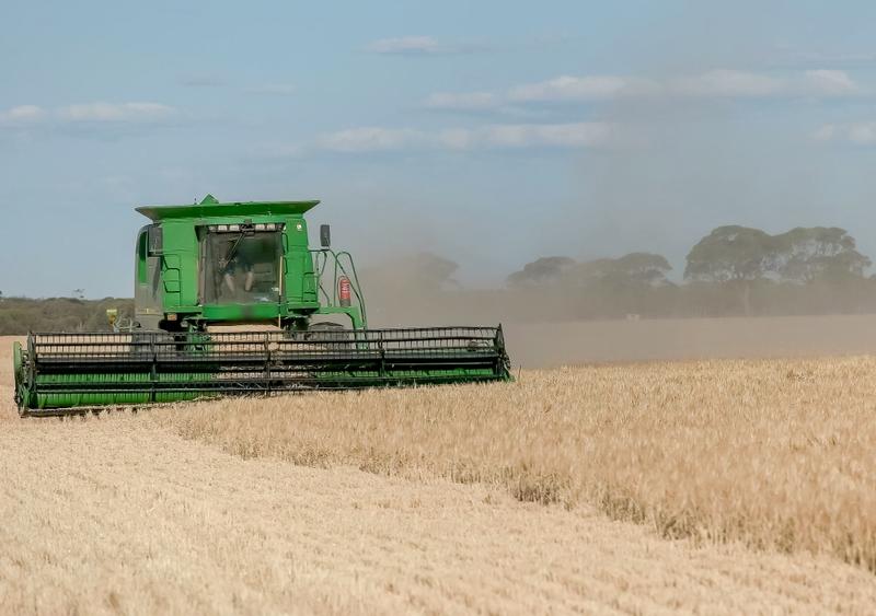 Barley harvest in Western Australia. Image from Shutterstock