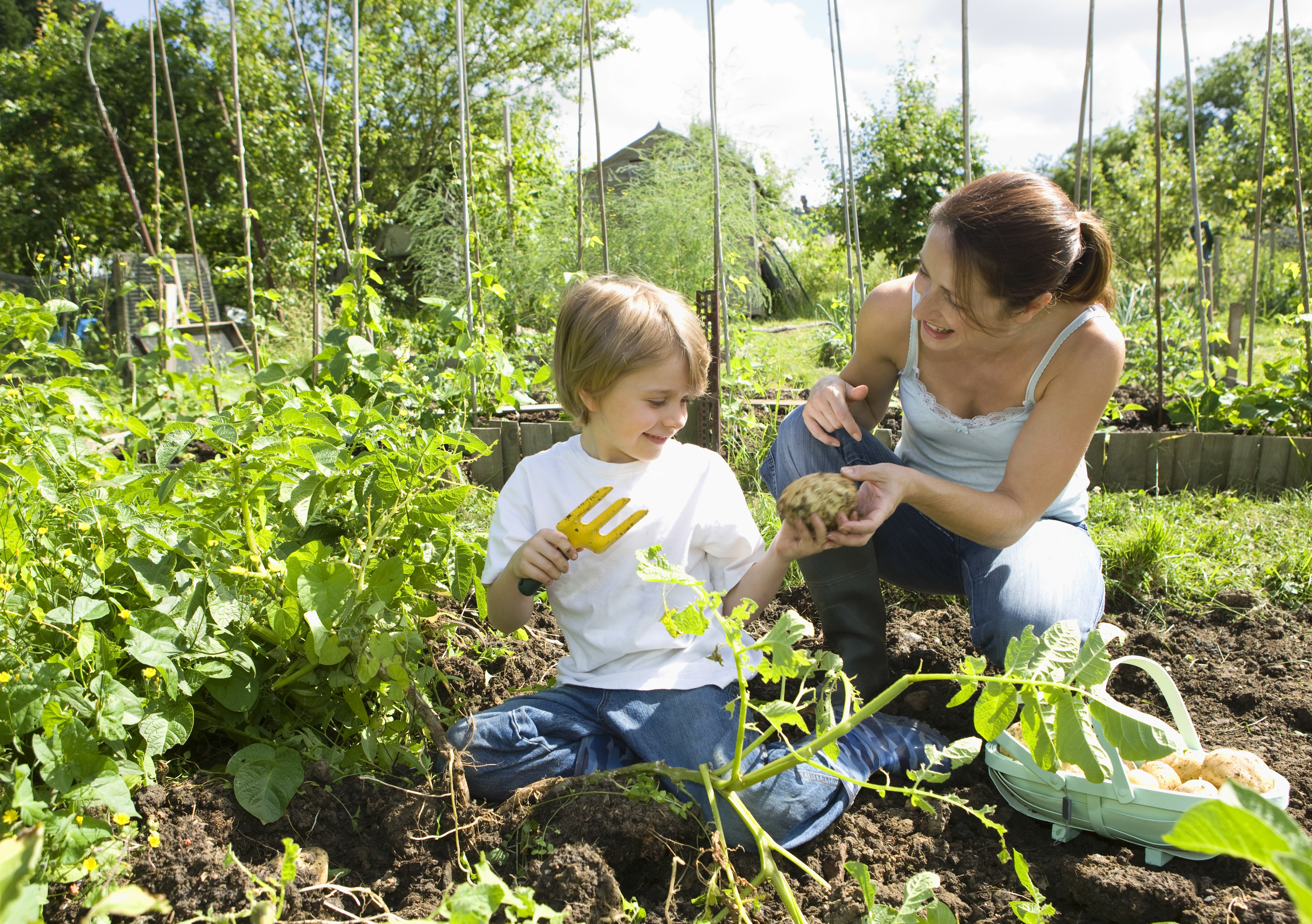 Taking care of plants and starting a gardening project can help to relieve some of the stress brought on by the COVID-19 pandemic, a group of UNSW Sydney cross-discipline experts say. Photo: Shutterstock