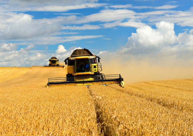 China has recently launched its first ever anti-dumping investigation against Australia, targeting barley exports. Image from Shutterstock