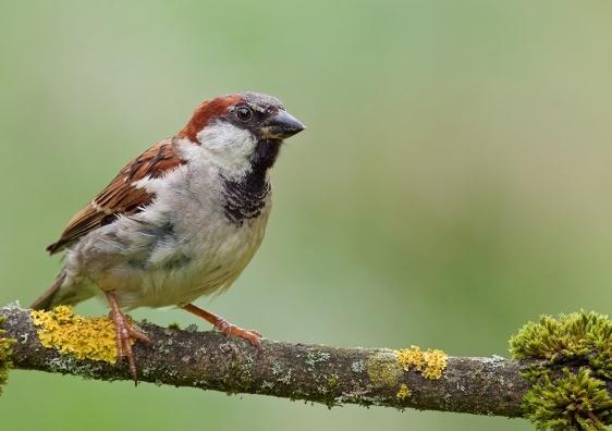 sparrow6_1.jpg